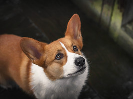 How to keep your pet safe in a disaster and how to get prepared for a disaster