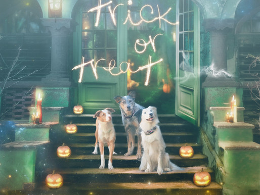 6 Ways to keep your pet safe + 11 ways to celebrate safely with your pet on Halloween