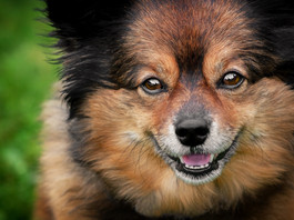 7 easy tips to rock your summertime pet session + checklist