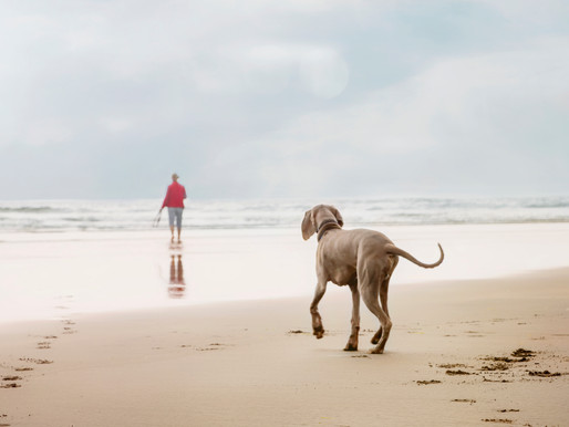 Summertime Pet Water Safety tips