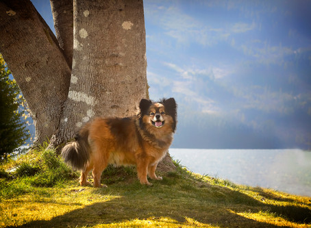 7 Tips to take excellent photos of your dog at home!