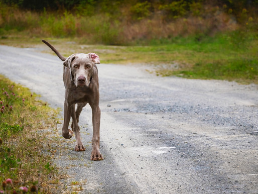 10 tips for Responsible Dog Ownership