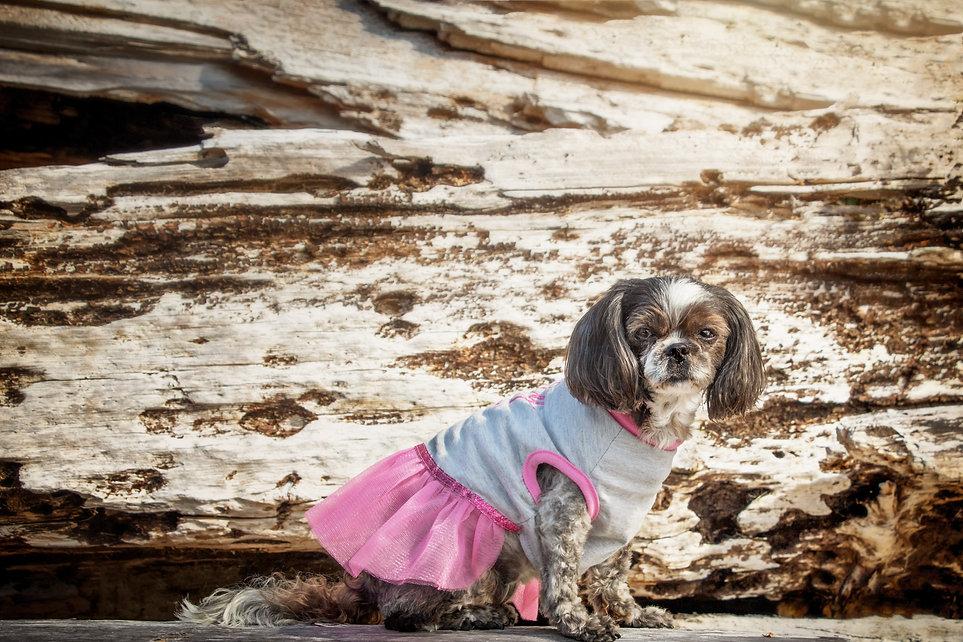 2019 September9 Beach Dog Ozzy-16.jpg