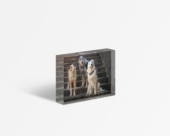 Acrylic block with a trio of dogs on the staris