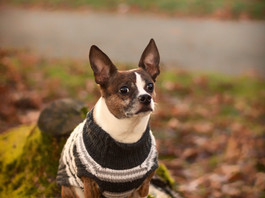 Our top 5 favorite Pet Sweaters from Etsy