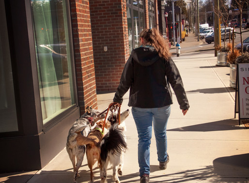 National Walk Your Dog Week - Benefits of Walking Your Dog, Tips + Our Favorite places to walk!