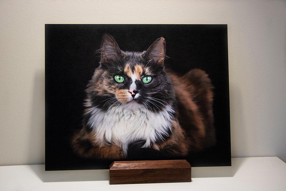 11x14 mounted watercolor fat cat.jpg