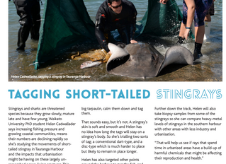 Stingrays in the News