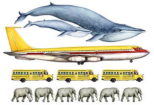 blue whale size.jpg