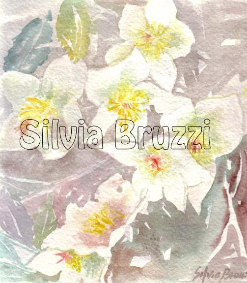 Helleborus Fiore di Natale!