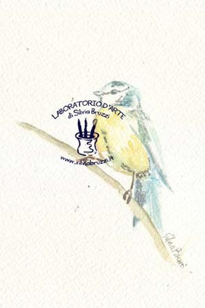 Birds / Uccellini