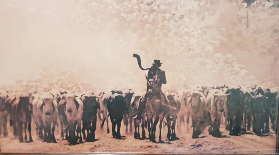 O ponteiro de boiada ia na frente do gado com o berrante, que ele tocava ora para acalmar, ora para estimular, os animais, e também para dar sinais aos demais peões.
