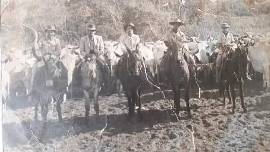 As comitivas eram formadas por peões de boiadeiro que, montados preferencialmente em muares, embora também utilizassem cavalos, faziam o transporte do gado andando pelas estradas.