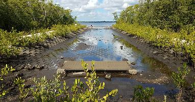 Shoreline stablization example