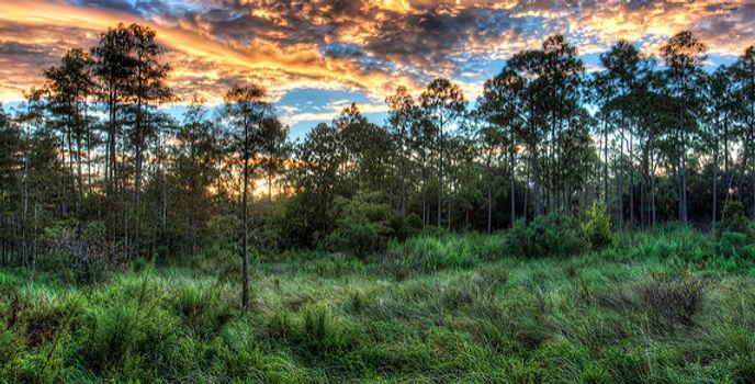 Native landscape