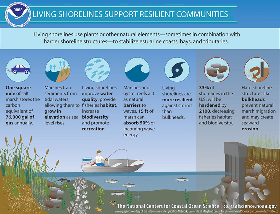 NOAA graphic on Living Shorelines support resilient communities