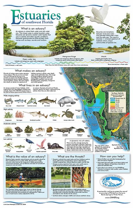 Estuaries of southwest Florida poster
