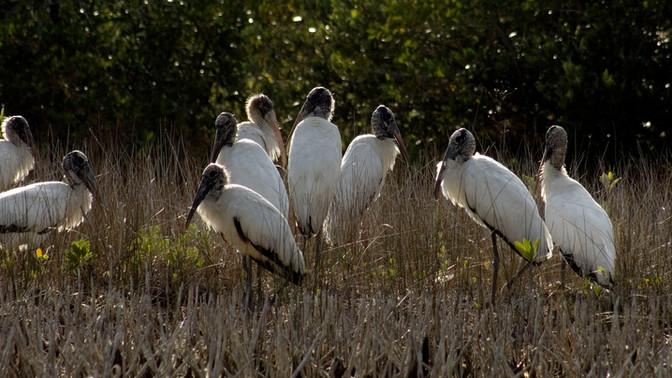Funding for Wetland Programs