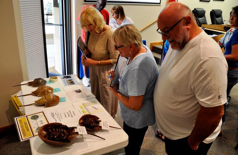 Horseshoe Crab Watch