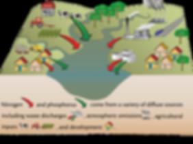 nutrient pollution sources.png