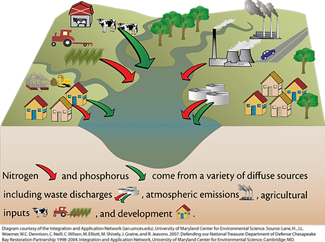 nutrient pollution sources.png