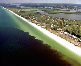 Red tide event on the coast