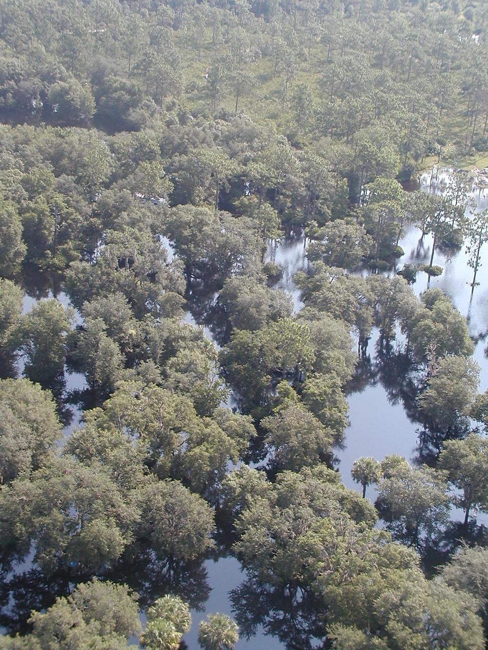 Swamp habitat