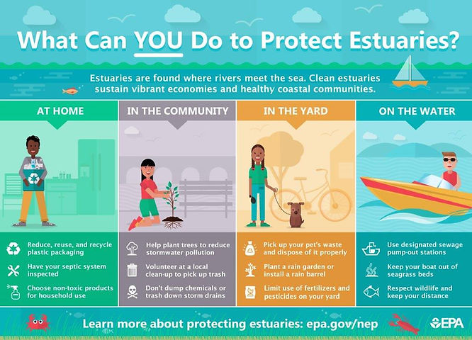 What can you do to protect estuaries graphic