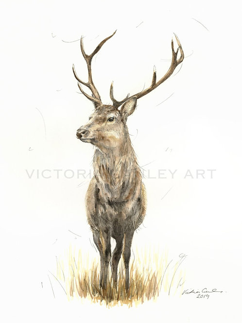 'Serendipity' Watercolour Stag