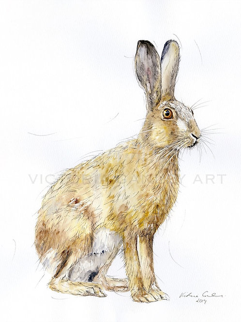 'Stand To' Watercolour Hare Print