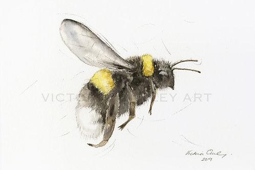 'Bee Happy' Watercolour Bee Print