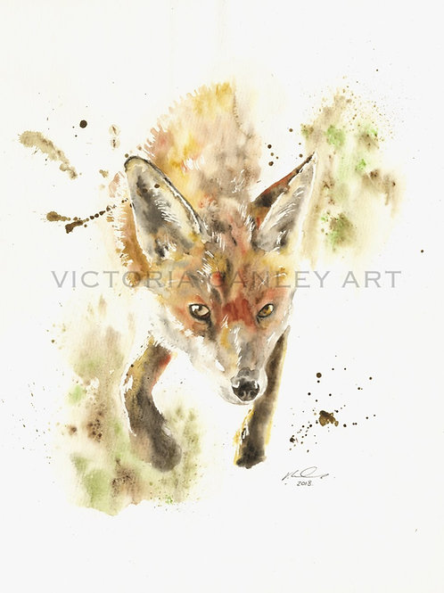 'Looking Through' Watercolour Fox