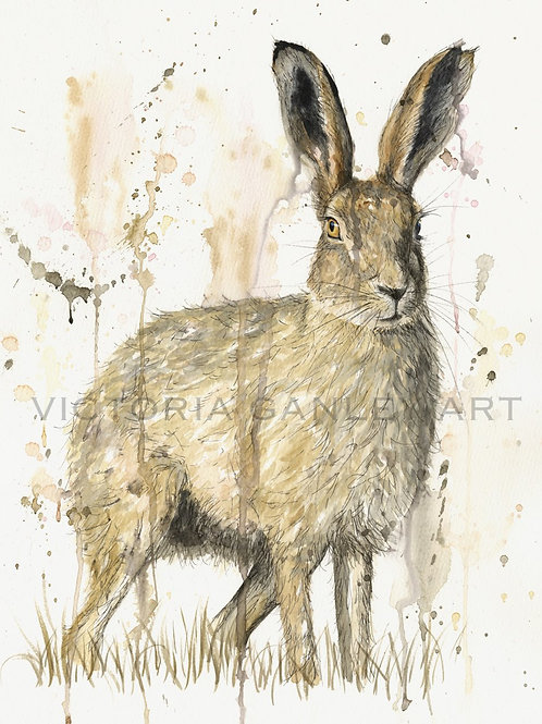 'Hare in the Grass' Watercolour Hare