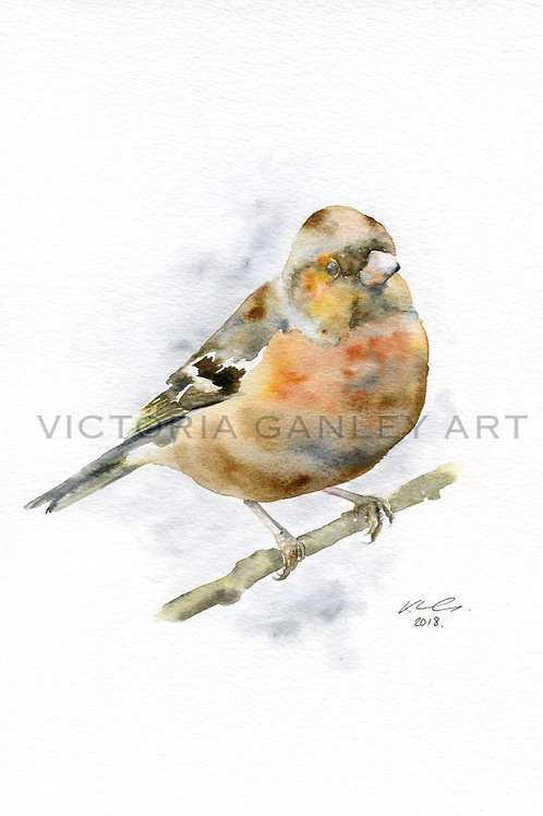 'Copper' Watercolour Chaffinch