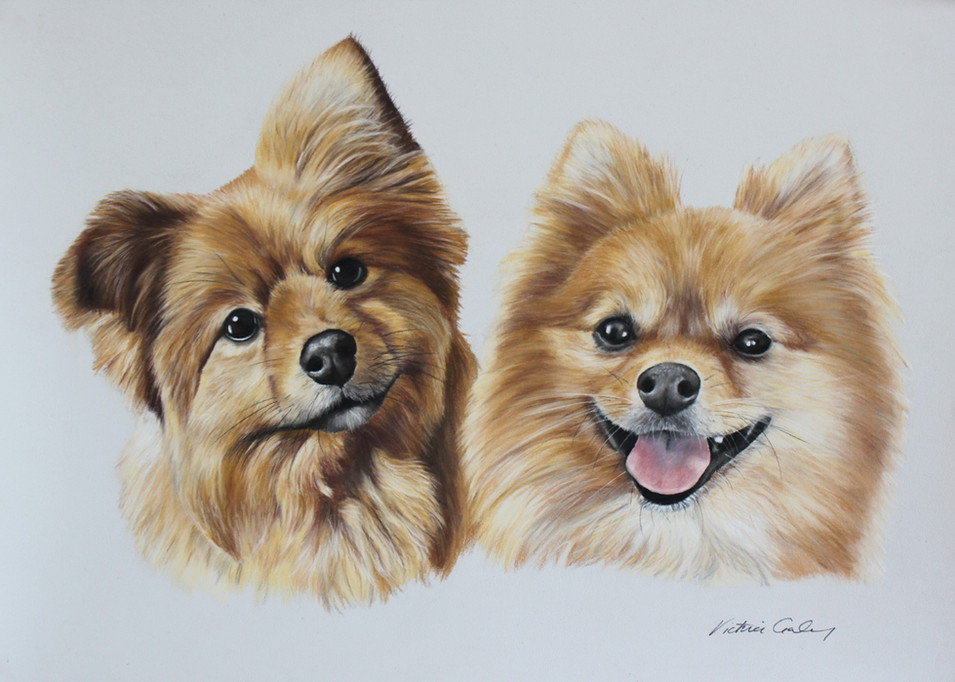 Benji & Alfie