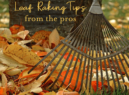 How to Rake Leaves: 9 Tips from Landscaping Professionals