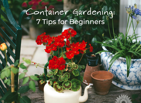 Container Gardening: 7 Tips for Beginners