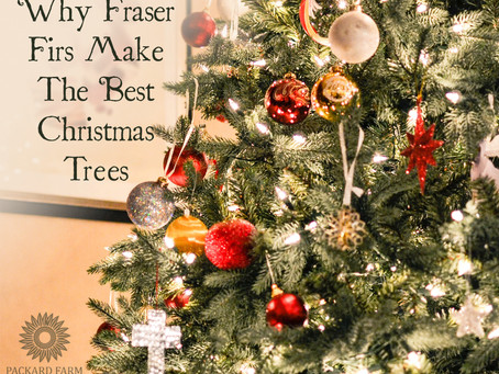 What's the Best Kind of Christmas Tree? 6 Reasons Why the Fraser Fir Rules Supreme