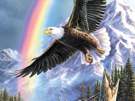 Aquila - Animale Medicina