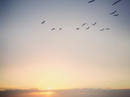 Free thyself - Libera te stesso con i Fiori di Bach
