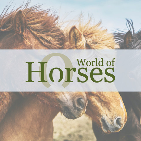 #throwbackthursday to a very old logo design from back in my early days for a website packed with information, articles, horses for sale, horses to share and equestrian businesses from across the UK 🌍 🐴 🇬🇧