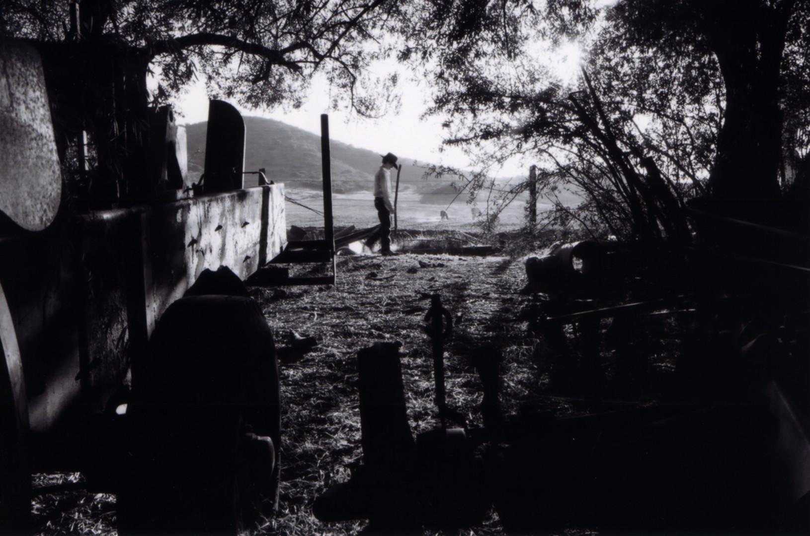 Searchlight Billy near horses.jpg