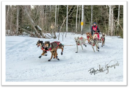 2019 John Beargrease Sled Dog Race
