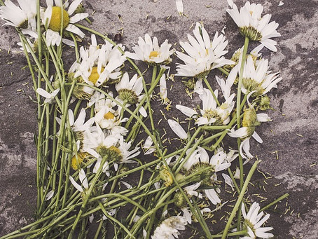 Trampled Flowers
