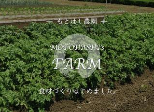 野菜作りはじめました