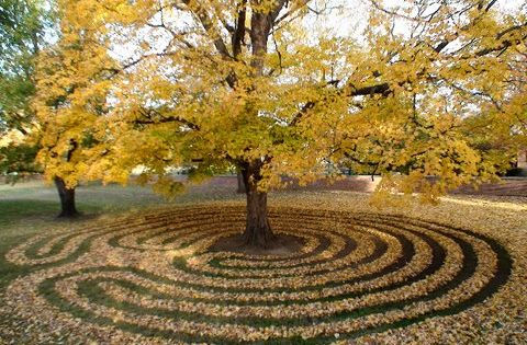 tree labyrinth.jpg