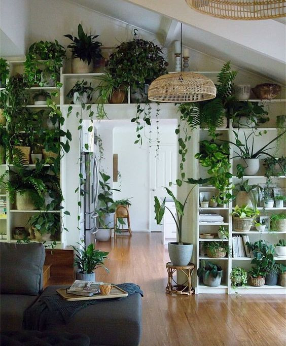 Estante cheia de plantas. Foto: Decor house.