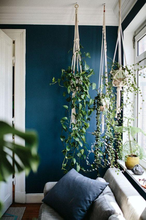 Plantas suspensas em plant hangers.