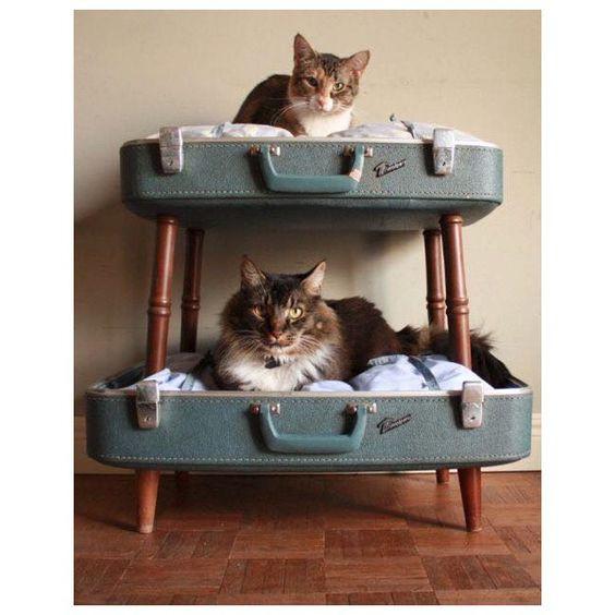 Beliche para gatos de mala.