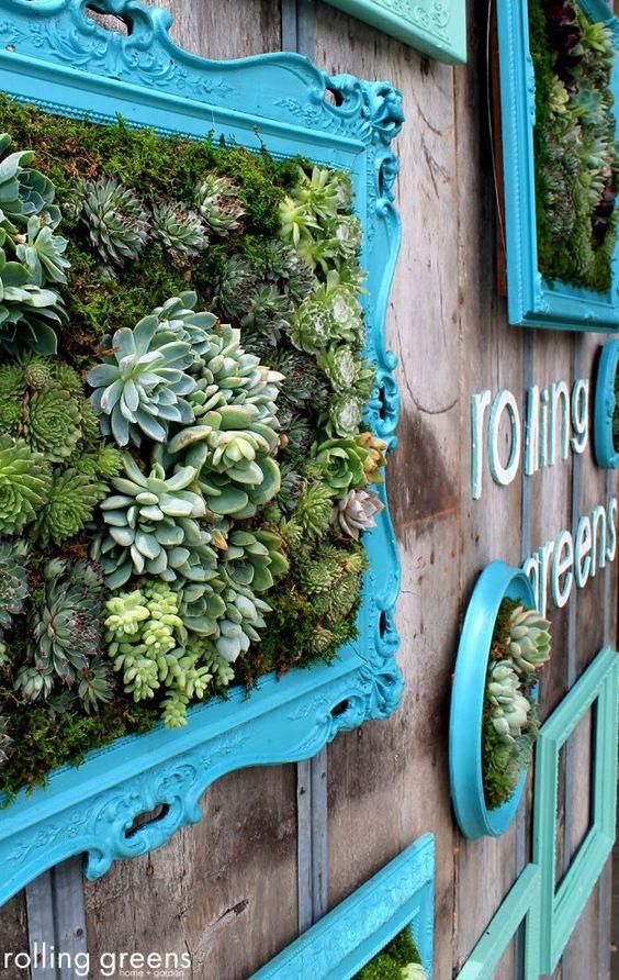 Molduras com suculentas. Foto: Rolling Greens.